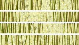 套与许多竹子的水平的横幅 库存图片
