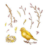 套与黄色鸟的手拉的水彩樱桃分支和 皇族释放例证