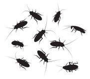 套与细节的黑剪影蟑螂 免版税库存照片