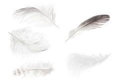 套五根被隔绝的轻的羽毛 免版税图库摄影