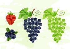 套五颜六色的新鲜水果污点 库存照片