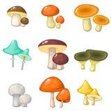 套五颜六色的森林蘑菇 免版税库存照片