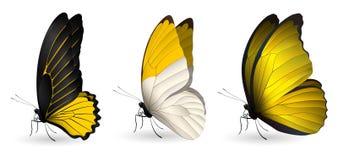 套五颜六色的现实蝴蝶 库存照片