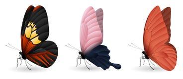 套五颜六色的现实蝴蝶 免版税库存照片