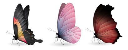 套五颜六色的现实蝴蝶 免版税库存图片