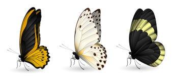 套五颜六色的现实蝴蝶 库存例证