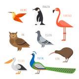 套五颜六色的鸟象 猫头鹰、蜂鸟和鸽子 库存照片