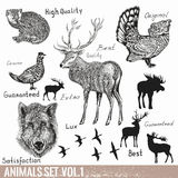 套传染媒介手拉的详细的森林动物 免版税库存图片