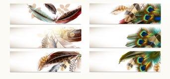 套传染媒介现实五颜六色的羽毛 向量例证