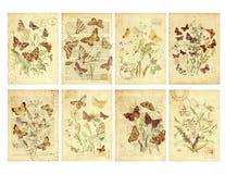 套八个葡萄酒样式蝴蝶标签 免版税图库摄影
