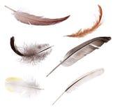 套六根被隔绝的颜色羽毛 免版税库存图片