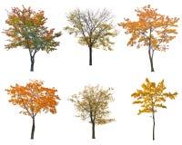 套六棵秋天树在白色isoalted 库存照片