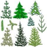 套冷杉木和冷杉为圣诞节分支 库存照片
