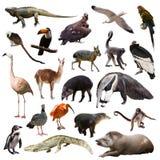套南美动物在白色背景的 免版税库存图片