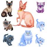 套各种各样的品种猫和小猫  免版税库存照片