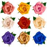套各种各样的颜色玫瑰  免版税图库摄影