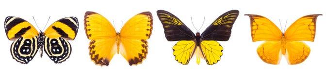 套四只美丽的五颜六色的蝴蝶 免版税库存图片