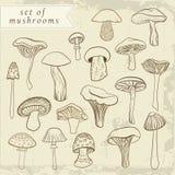 套在柔和的淡色彩的不同的手拉的蘑菇 免版税库存图片