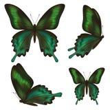 套在白色的美丽的现实绿色蝴蝶 库存例证