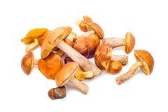 套在白色的蘑菇 免版税库存照片