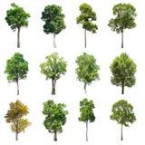 套在白色背景的被隔绝的树 免版税库存照片