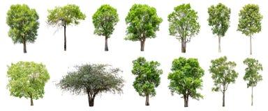 套在白色背景的被隔绝的树 库存照片