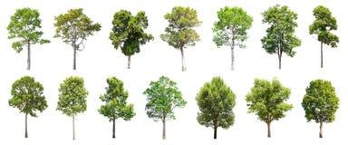 套在白色背景的被隔绝的树 库存图片