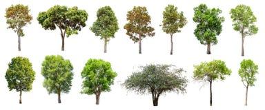 套在白色背景的被隔绝的树 免版税图库摄影