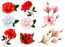 套在白色背景隔绝的美丽的花 库存例证