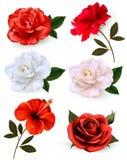 套在白色背景隔绝的美丽的花 皇族释放例证