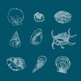 套在蓝色背景的贝壳传染媒介 手拉的草图 库存例证