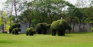 套在被塑造的大象的灌木 免版税库存照片