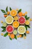 套在轻的背景的柑橘:桔子,普通话,柠檬,葡萄柚,石灰,金桔,蜜桔 新鲜的有机水多的果子 酸 库存图片