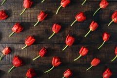 套在黑暗的木桌上的红色郁金香 图库摄影