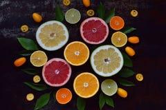 套在黑暗的背景的柑橘:桔子,普通话,柠檬,石灰,葡萄柚,金桔,蜜桔 新鲜的有机水多的果子 Sourc 免版税库存照片
