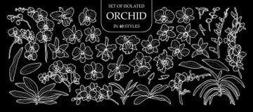 套在40个样式的被隔绝的兰花 仅逗人喜爱的手拉的花传染媒介例证白色概述 皇族释放例证