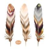 套在boho样式的颜色羽毛 免版税库存照片