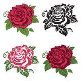 套多彩多姿的玫瑰 皇族释放例证