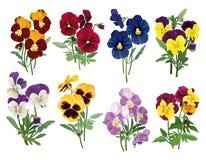 套多彩多姿的蝴蝶花 库存图片