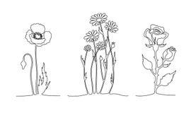 套实线花 鸦片,春黄菊,上升了 一线描概念 库存例证