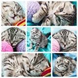套小苏格兰人的图象折叠小猫 库存照片