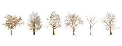 套干燥树形状和树枝在白色背景隔绝的 免版税库存图片