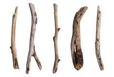 套干燥树枝 免版税库存图片