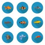 套平的水族馆鱼象 图库摄影