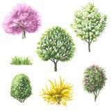 套开花的树和灌木 库存例证