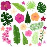 套异乎寻常的热带花和叶子 库存照片