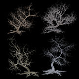 套弯曲的光秃的树 图库摄影