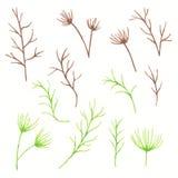 套手拉的水彩春天离开和枝杈 植物的剪贴美术 设计的花卉装饰元素 免版税库存照片