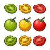 套手拉的蕃茄 分支,整个和切片 向量例证