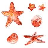 套手拉的水彩海星和海壳 在白色背景隔绝的艺术性的传染媒介例证 免版税库存照片